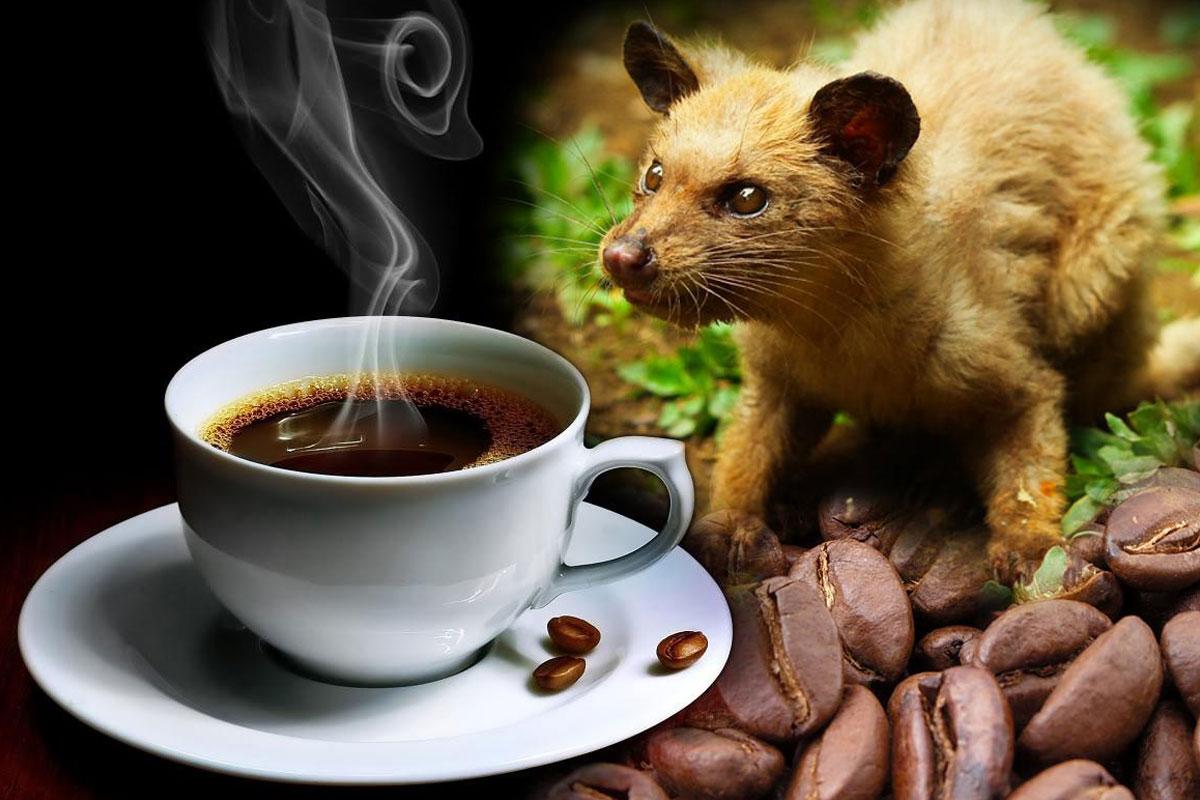 Dünyanın En Pahalı Kahvesinin Sırları