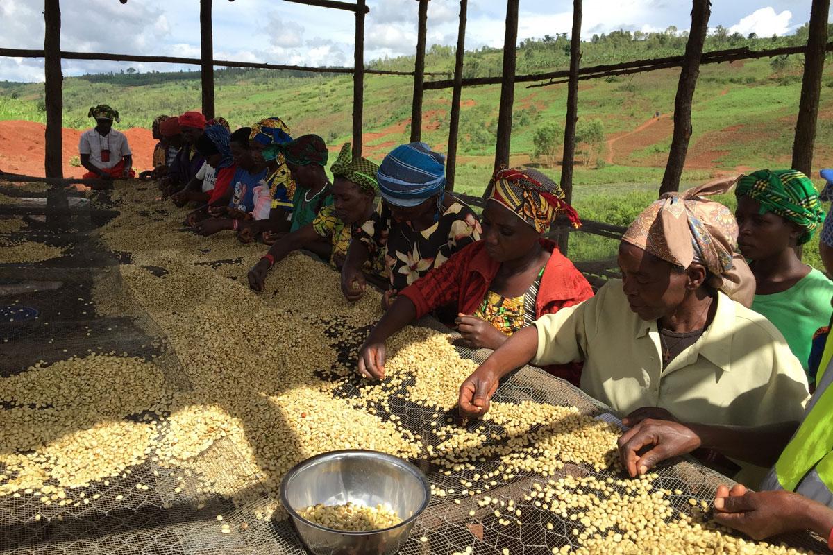 Ruanda'ya Kahve Yolculuğunda Hazal Alyağut'a Eşlik Ediyoruz