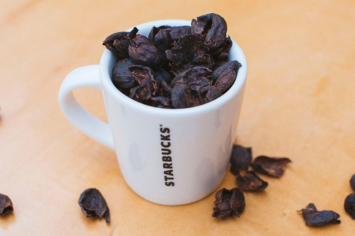 Starbucks Cascara Latte ve Nitelikli Kahve