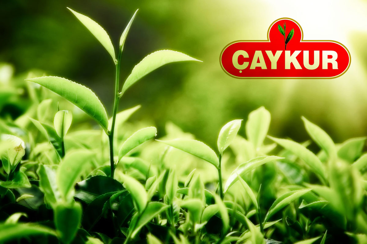 Çayda Üretim Tüketimi Yakalayamıyor, ÇAYKUR Zarar Ediyor