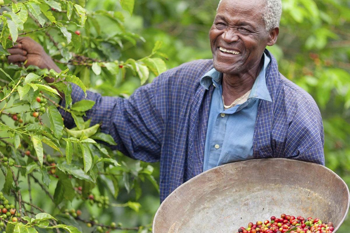 Nitelikli Kahveye İlgi Sayesinde Afrika Kahve İhracatı Yükselişte
