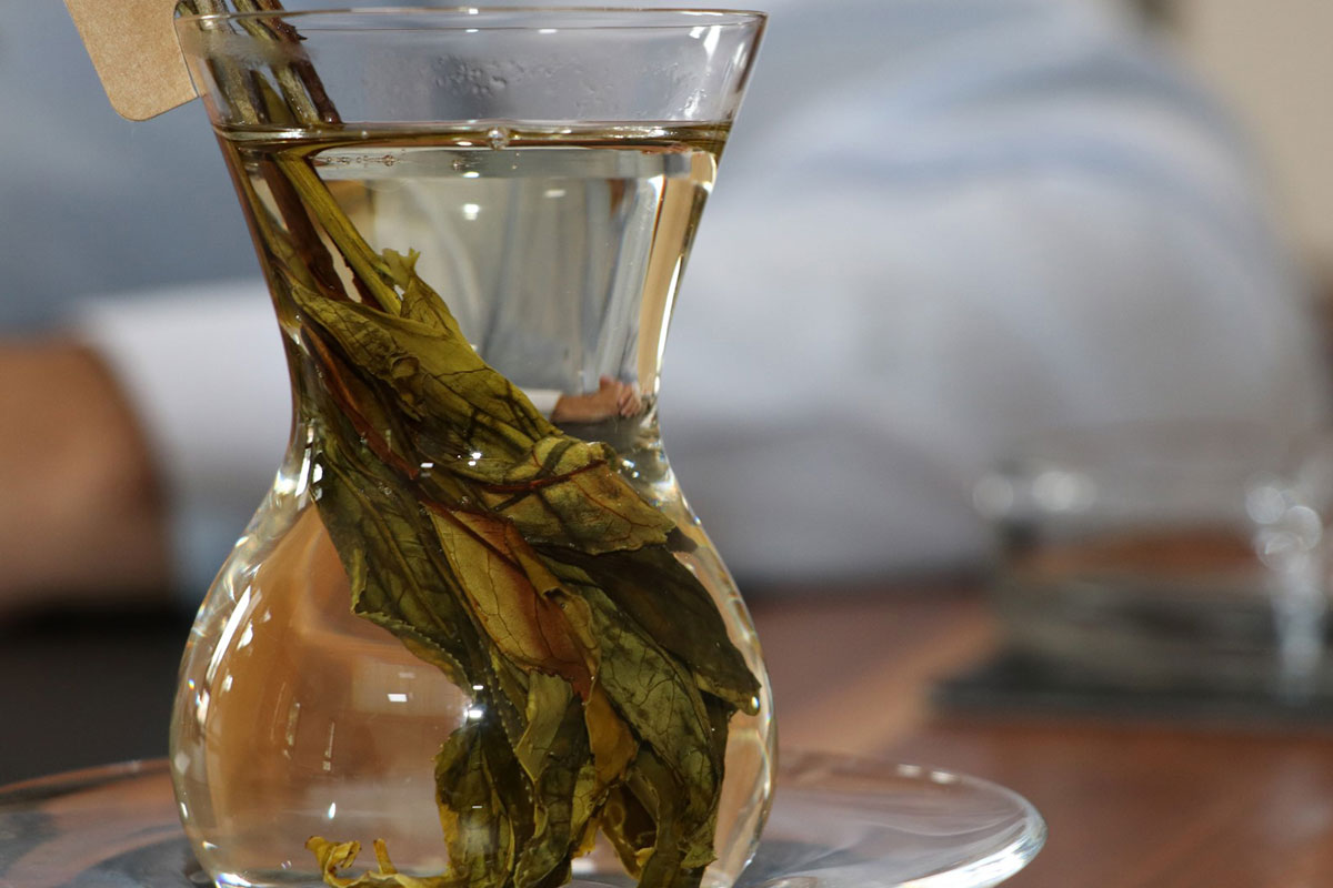 Turistler Türk Çayının Üretimine Tanık Oluyor