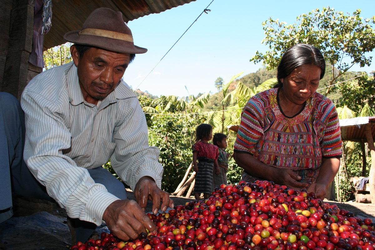 Türkiye'den 850 Kahve Üreticisi Maya Yerlisi Çiftçiye Ekipman Desteği