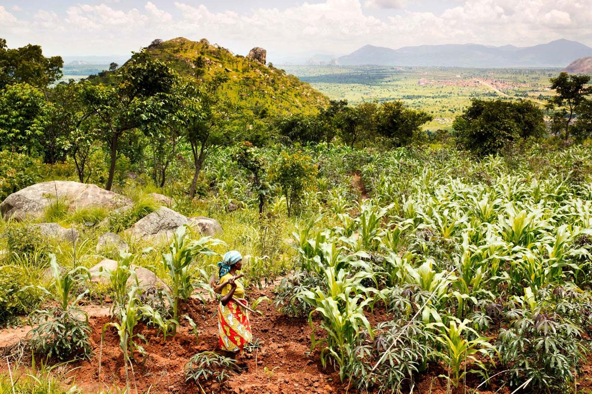 Angola, Kahve Üretiminde Altın Günlerini Arıyor