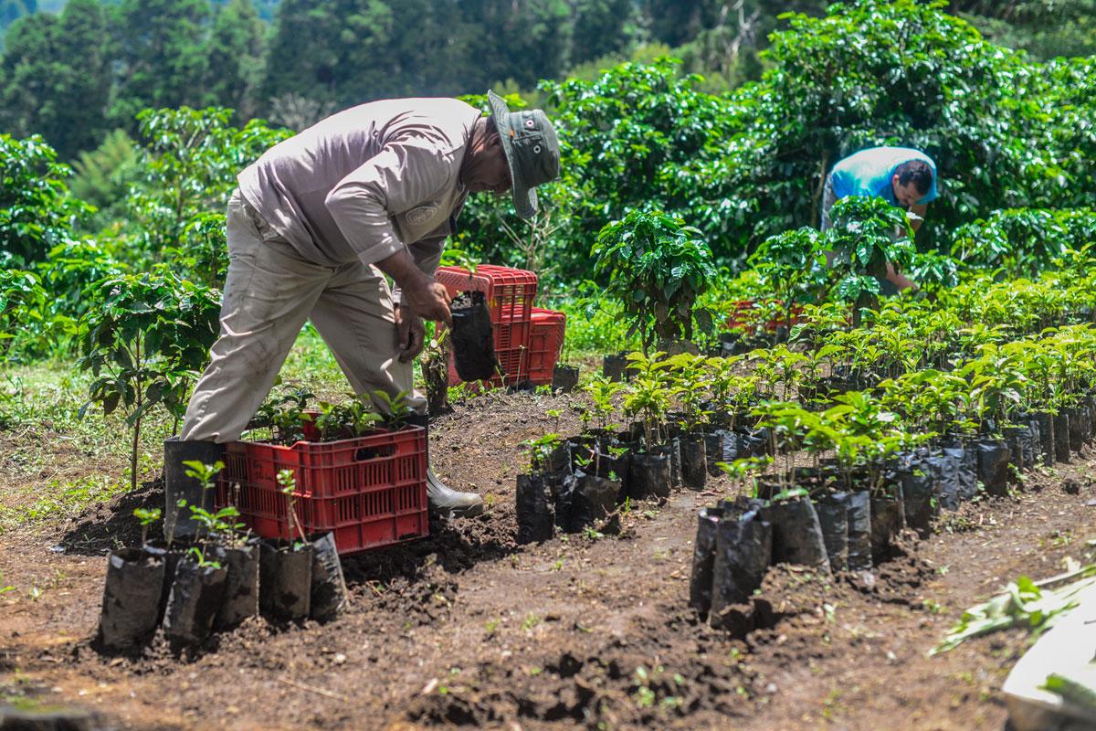 Birleşmiş Milletler İklim Konferansında Sürdürülebilir Kahve Dikkat Çekti