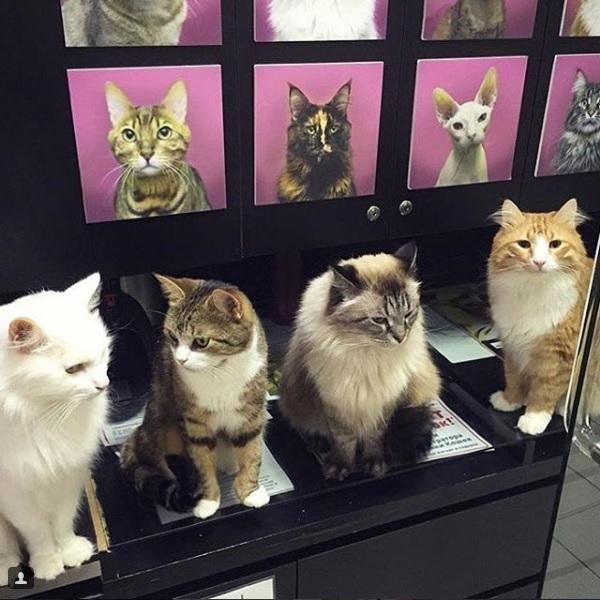 Sadece Kedilerin Girebileceği Kafe