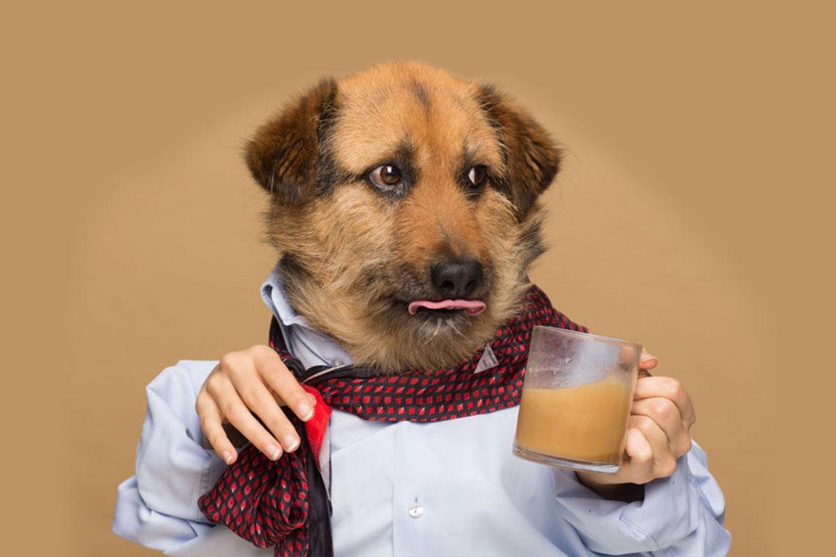 Köpeğinizle Kahve Keyfi Gerçeğe Dönüşebilir