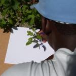 Pequenos herbários de sombras