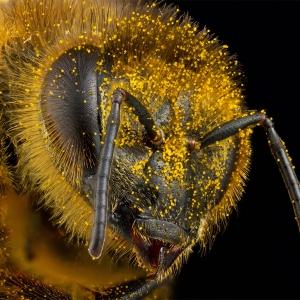 Os insetos à nossa volta: diversos, úteis e letais