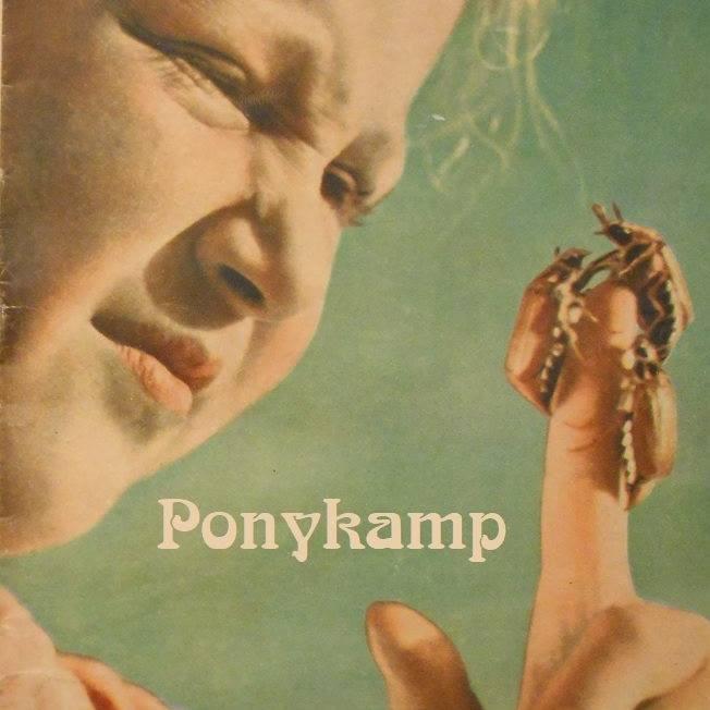 Zalm van de maand: Ponykamp