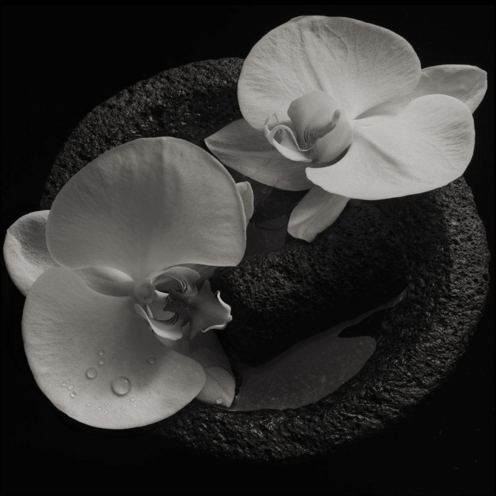 Mike Patton & Jean-Claude Vannier – Corpse Flower (★★★★): Getalenteerd duo geeft masterclass