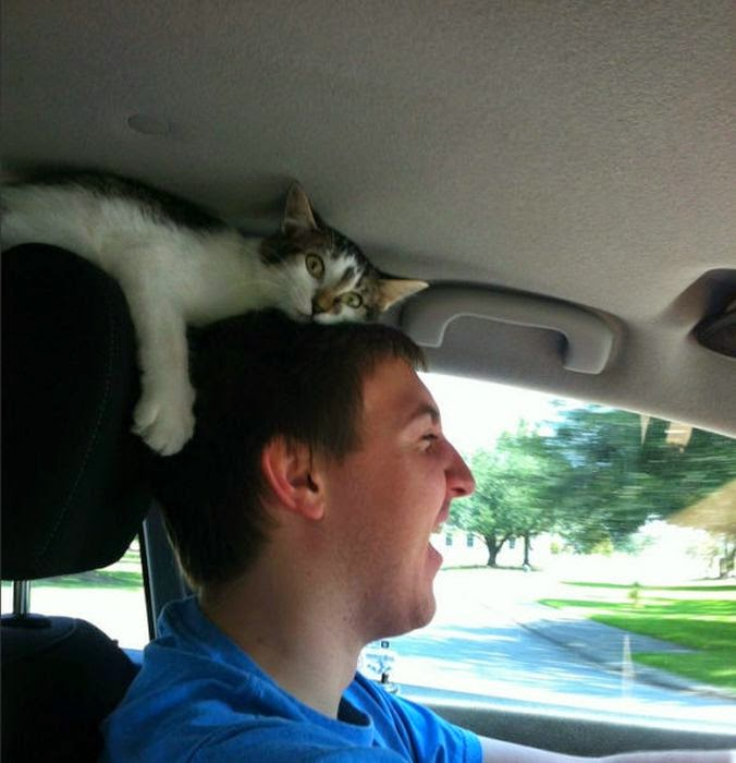Oturmaması gereken yerleri çok iyi bilen 10 şapşik kedi