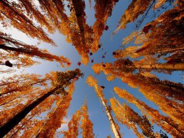 Sonbahar gelirken... En güzel sonbahar manzaraları