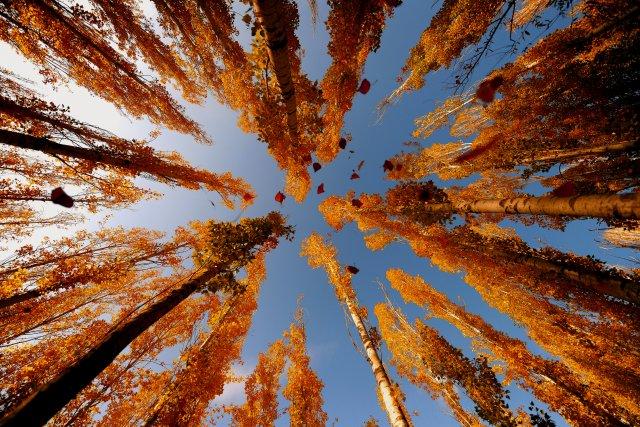 Sonbahar gelirken… En güzel sonbahar manzaraları