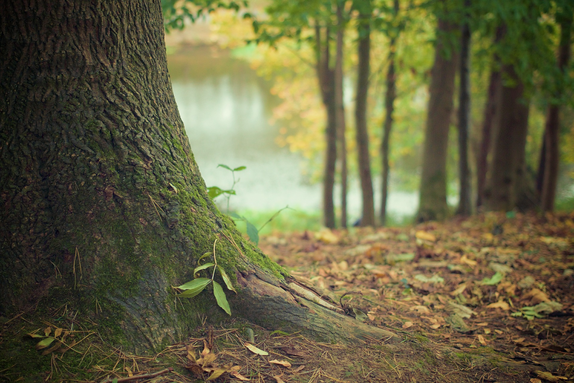 Tree trunk 569275 1920