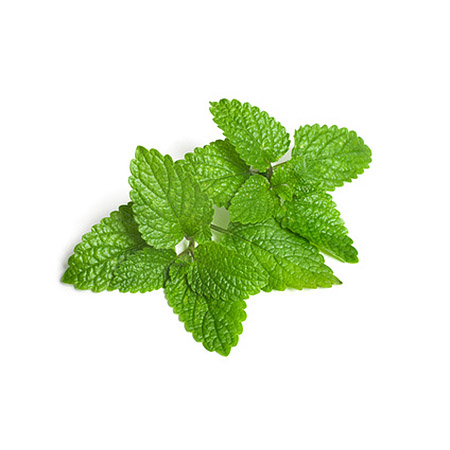 lemon balm pillow