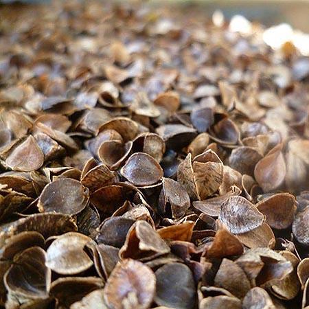 buckwheat husk filling