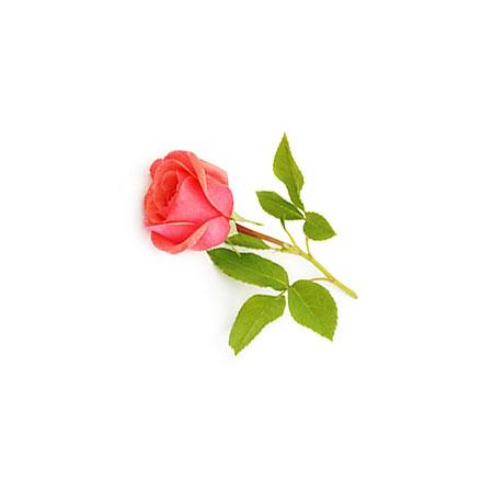 rose for spelt pillow