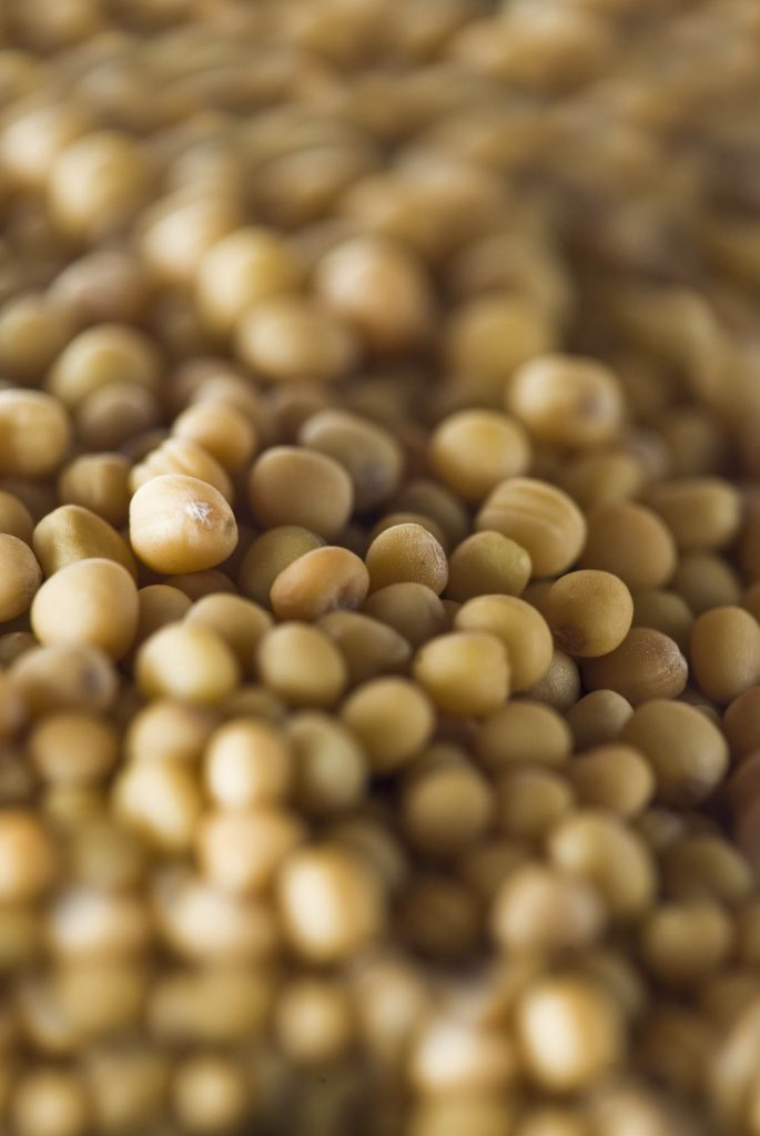 organic charlock seeds