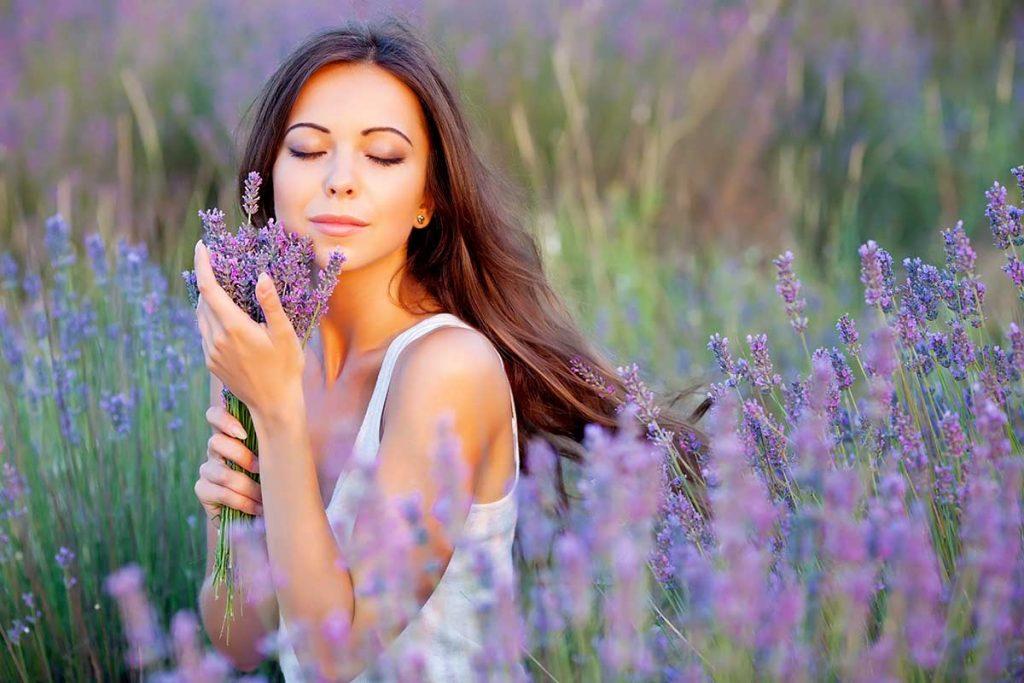 healing organic lavender