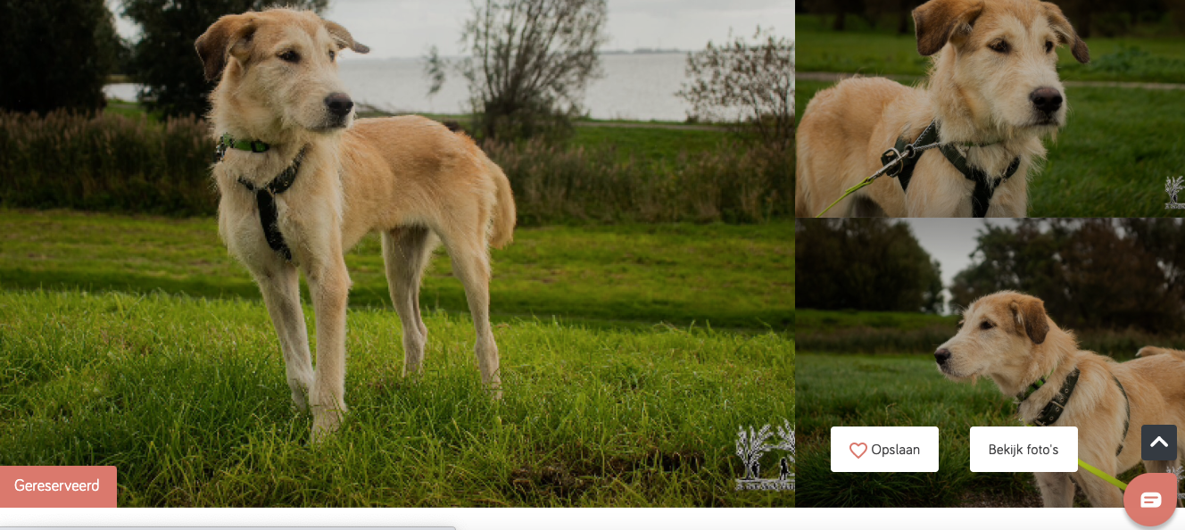 Afbeelding met gras, hond, buiten, veld  Automatisch gegenereerde beschrijving