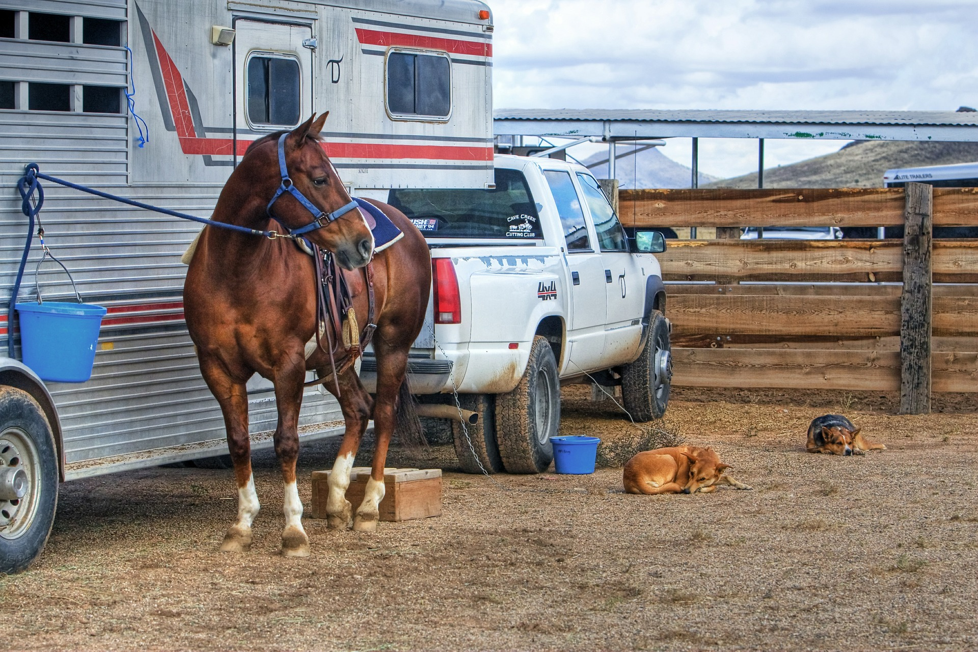 Livestock transport in process