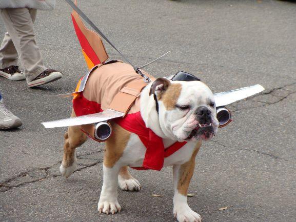 halloween dog logistics costume