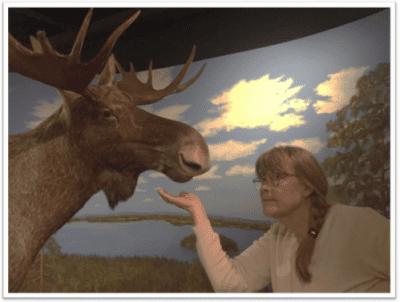 Maarit Korhonen katselee hirveä museossa
