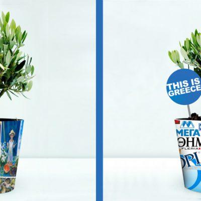 plants-φυτά-ελια-olive-tree-how-to-plan-fleria-corporate-gift-εταιρικά-δώρα-greek-aroma-άρωμα-ελλάδας1-handmade-pots