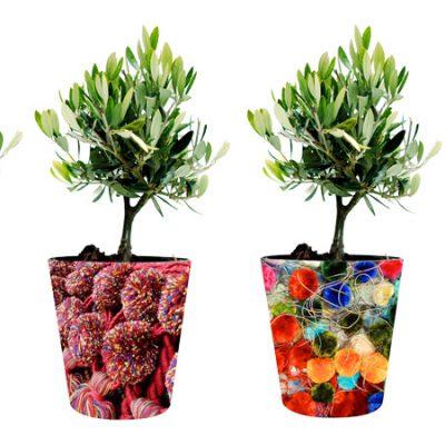 plants-φυτά-ελια-olive-tree-how-to-plan-fleria-corporate-gift-εταιρικά-δώρα-greek-aroma-άρωμα-ελλάδας4-handmade-pots