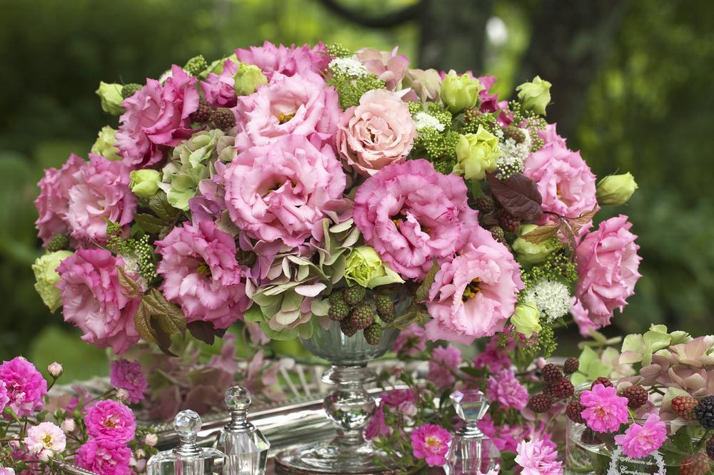 Corelli 3 Rose