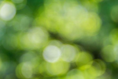 W odcieniach zieleni quiz