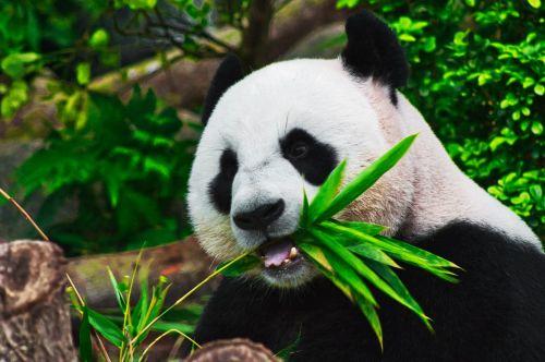 Pytania ze świata zwierząt quiz