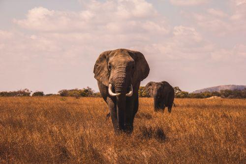 Motyw słonia - pytania z wiedzy ogólnej quiz