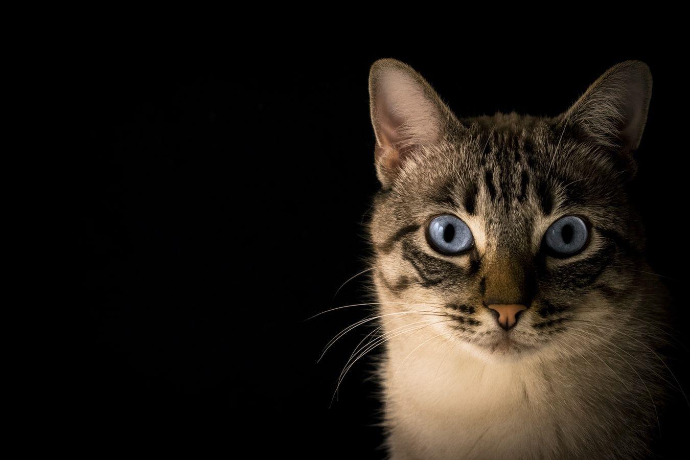 Wielki quiz wiedzy o kotach! quiz