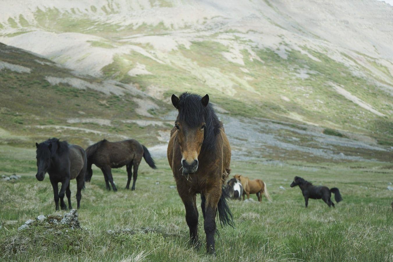 Konie - co o nich wiesz? quiz