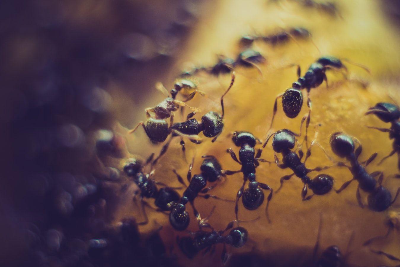 Quiz o mrówkach quiz