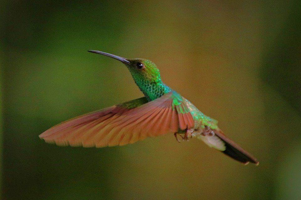 Kolibry - co o nich wiesz? quiz