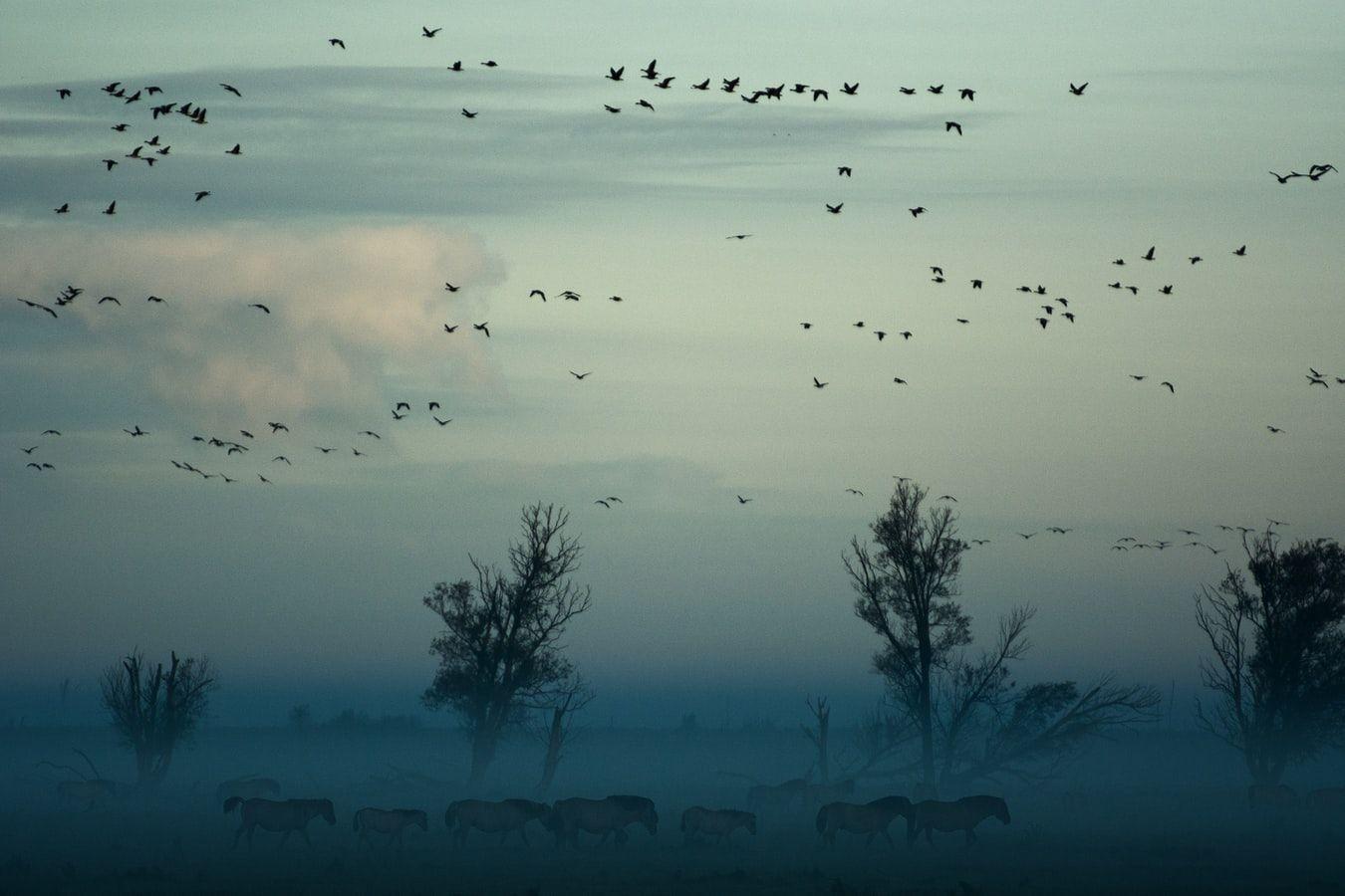 Najpopularniejsze ptaki Polski quiz