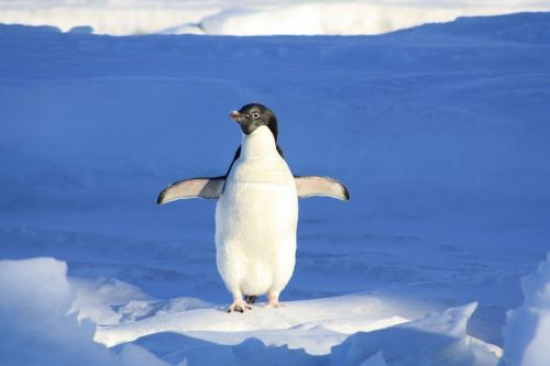Prawie wszystko o pingwinach quiz