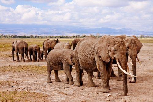 Co wiesz o słoniach? quiz