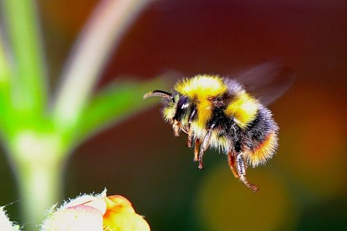 Quiz wiedzy o pszczołach quiz