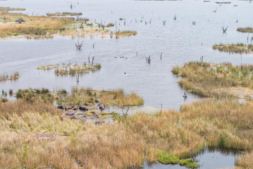 Malaria Verbreitung in Sumpf-Regionen