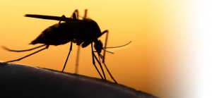 Malaria Verbreitung