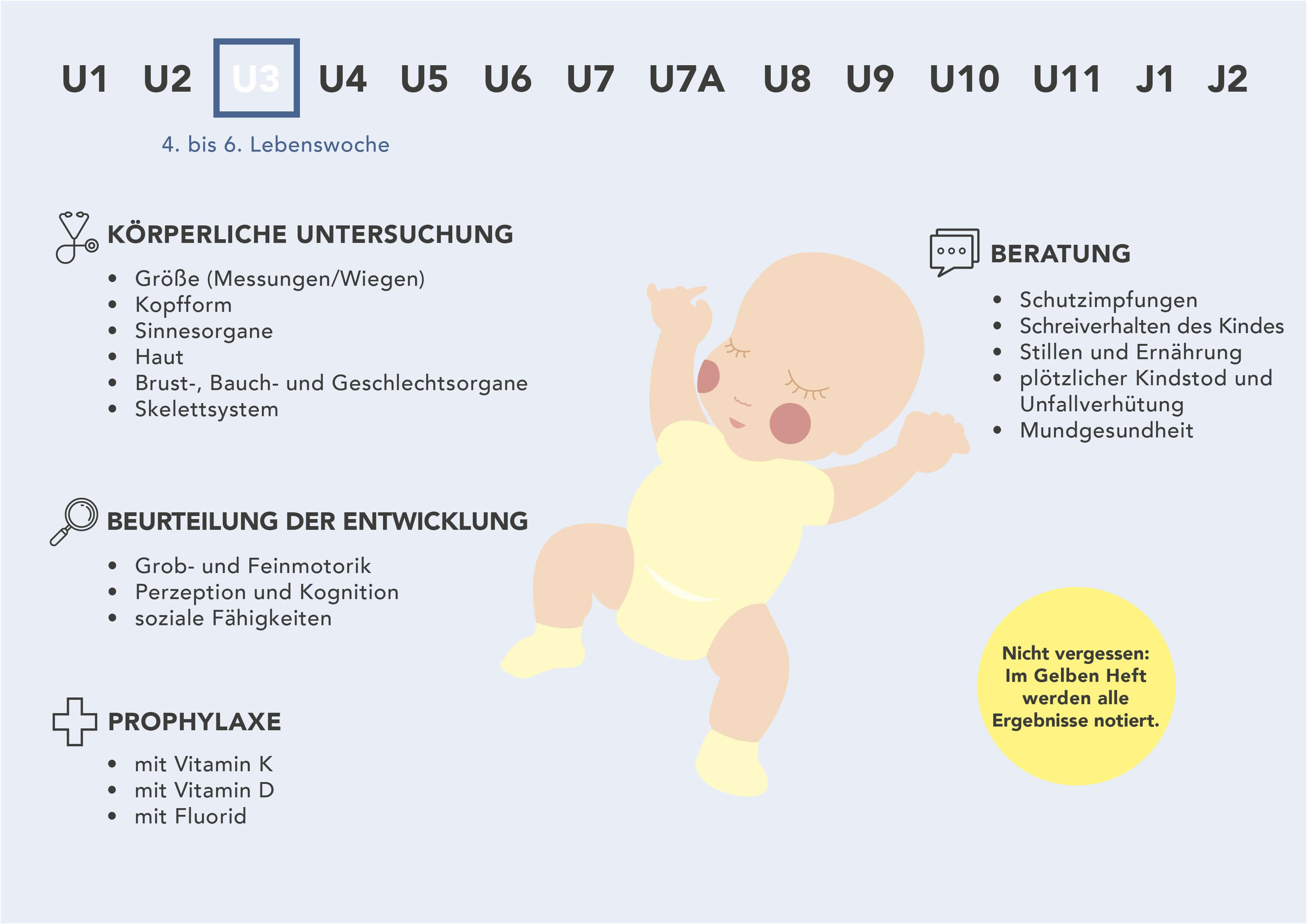 Fakten zur U3-Untersuchung - Grafische Darstellung