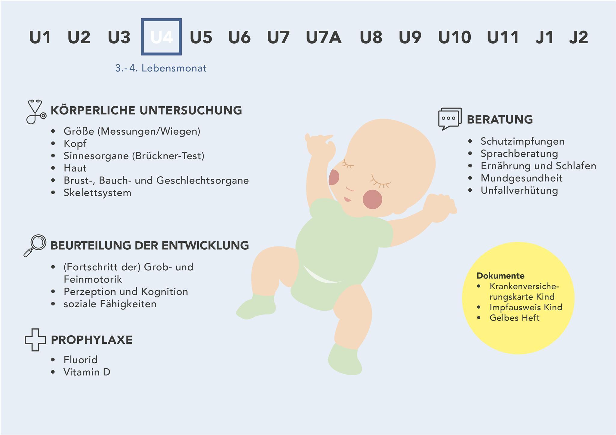 Die U4 auf einen Blick