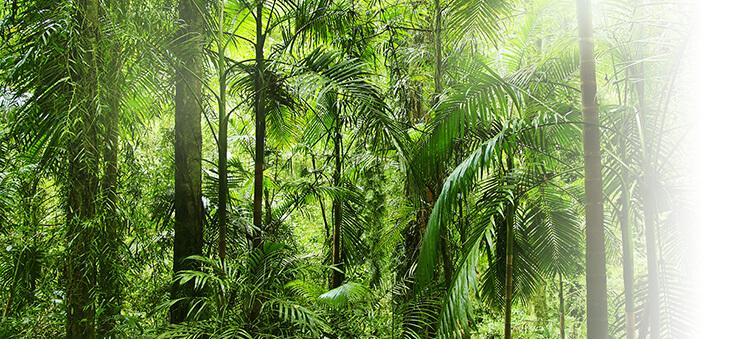 Anblick einer Dschungel-Landschaft.