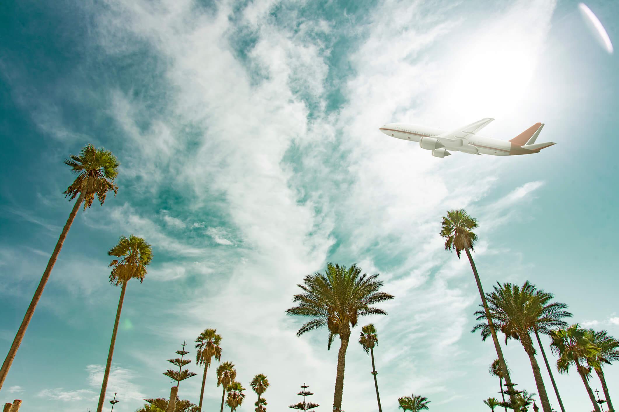 Flugzeug fliegt über Palmen hinweg.