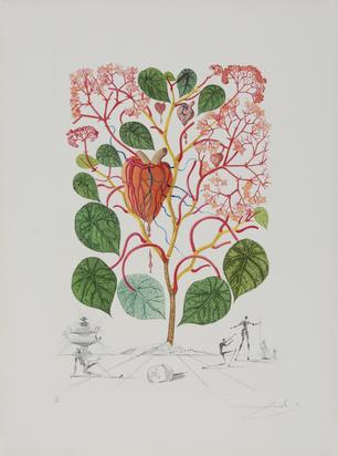 "Dalí Salvador, Begonia (Anacardium recordans), aus ""Flordali (Flora Dalinae)"""