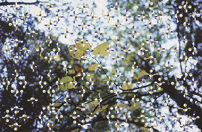 Orozco Gabriel, Light through Leaves